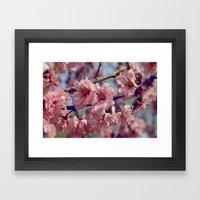 Sakura... One Spring In … Framed Art Print