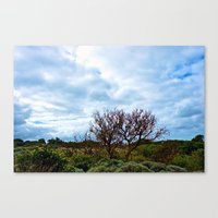 Barely Reaching Canvas Print