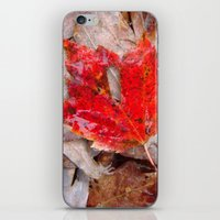 Autumnal Reverie 657 iPhone & iPod Skin