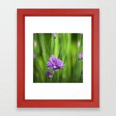 Garden Herbs Framed Art Print