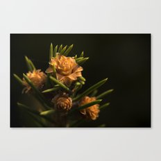 Spring cone Canvas Print
