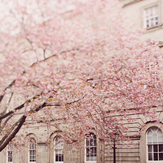 Cherry Blossom. Art Print