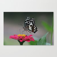 Nature. Canvas Print