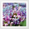 Blue Pink Flowers Art Print