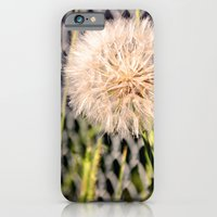 iPhone & iPod Case featuring Oversized Puff - Ready to break apart and fly away. by silverstreaked
