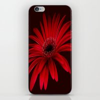 Gerbera iPhone & iPod Skin