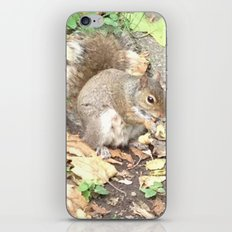 The Hungry Squirrel iPhone & iPod Skin