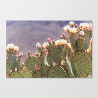 Prickly Pear Blooms I Canvas Print