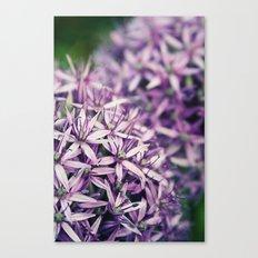 Vintage Purple Poppies  Canvas Print