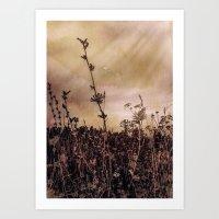 Last flowers of autumn Art Print