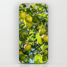 Swedish apples iPhone & iPod Skin