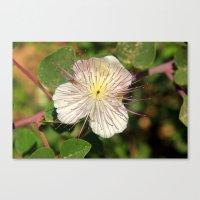 some flower Canvas Print