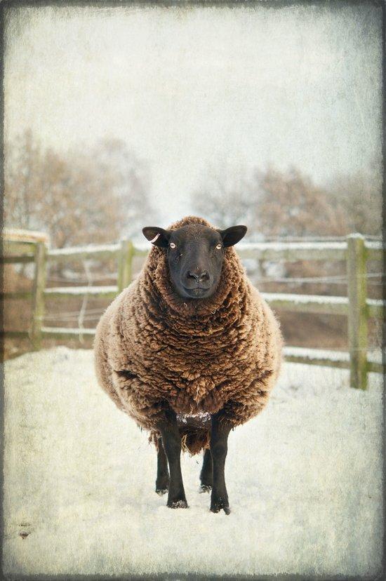 Zombie sheep Canvas Print