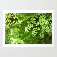 Maidenhair Art Print