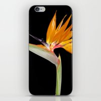 Birds Of Paradise Flower iPhone & iPod Skin