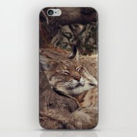 bobcat iPhone & iPod Skin