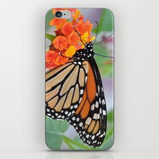 The Monarch Has An Angle iPhone & iPod Skin