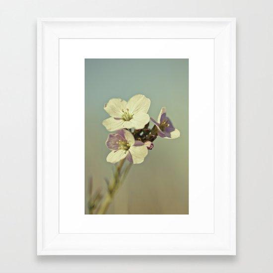 Cuckoo Flower 2 Framed Art Print