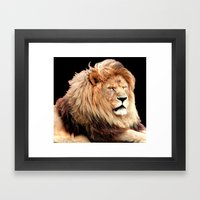 Sleepy Lion (Panthera leo) Framed Art Print