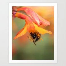 Bee on Flower. Art Print