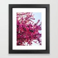 Apple Blossom-2014 Framed Art Print