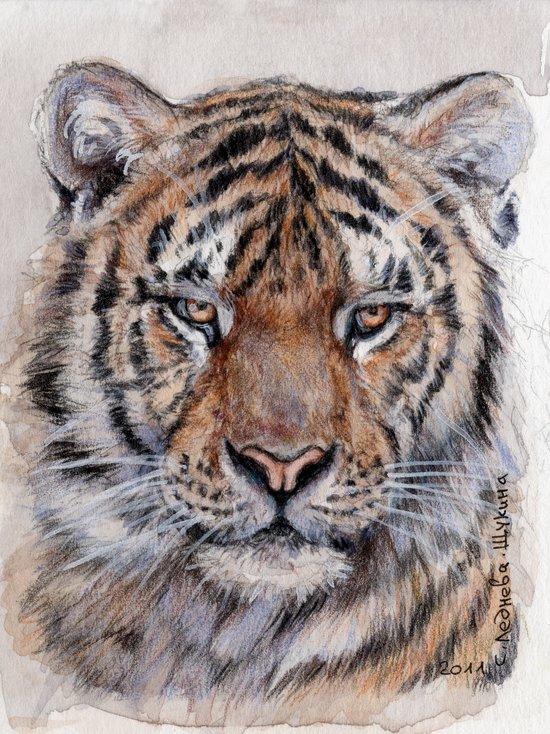 Tiger 779 Art Print