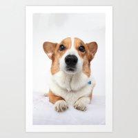 Dog -  Art Print