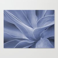 Blue Agave Attenuata Canvas Print