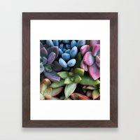 Colorful Succulents Framed Art Print