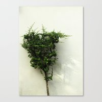 Fresh Green Tree Topiary Minimal White background Nature photography Canvas Print