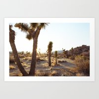 Joshua Tree, CA  / Dec 2… Art Print