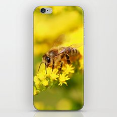 Hey Honey Bee iPhone & iPod Skin