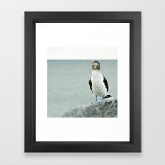 blue-footed booby Framed Art Print