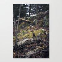 Overgrown. Canvas Print