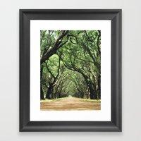 Canopy of Oaks Framed Art Print