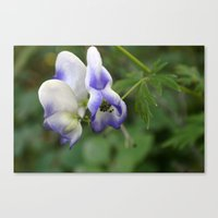 Pop Of Purple Canvas Print
