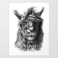Cute Llama G2013-068 Art Print