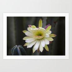 the whole flower  Art Print
