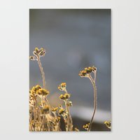 Light Shines From The In… Canvas Print