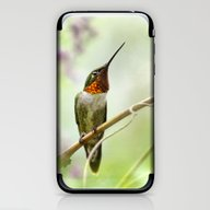 Hummingbird Passion iPhone & iPod Skin