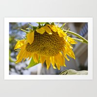 Art Print featuring Take Cover [SUNFLOWER] by David Nuh Omar