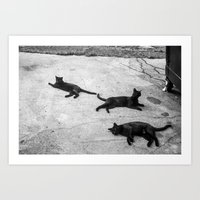 Motionless Cats in Motion Art Print