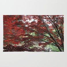 Red Japanese maple tree in Van Dusen Garden, Vancouver, BC, Canada. Floral nature photography. Rug