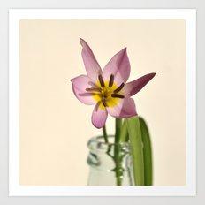 spring starflower Art Print