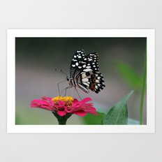 Nature. Art Print