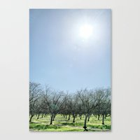 The Barren Canvas Print