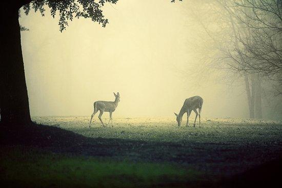 Two Deer on Green Art Print