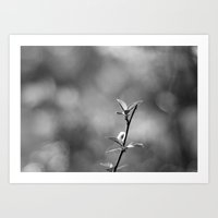 Spring Begins in Black and White Art Print
