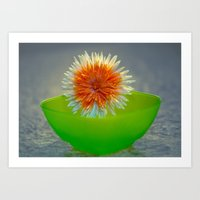 Daisy04 Art Print