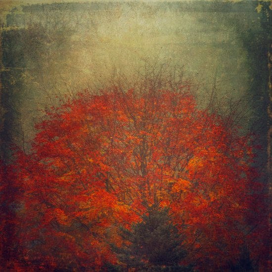 Fall Fire Art Print